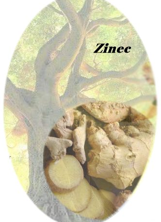 ZINEC-logo-1